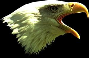eaglebest