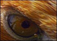 ep-eagle-eye